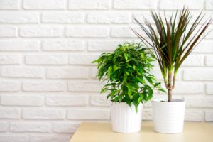 House Plants that Provide Cleaner Air