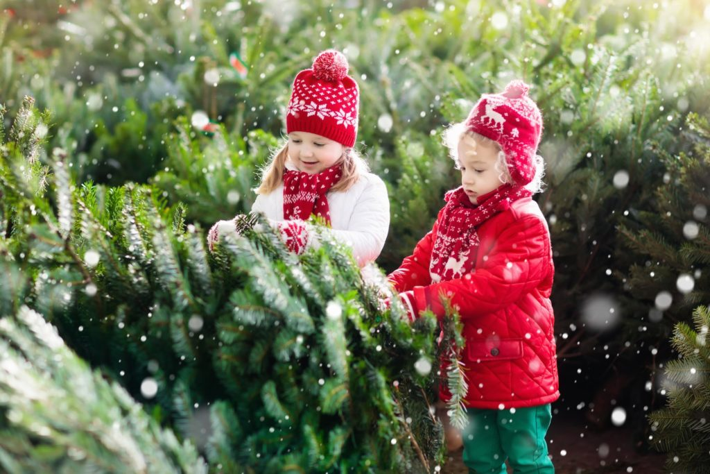 Take Care of Your Christmas Tree